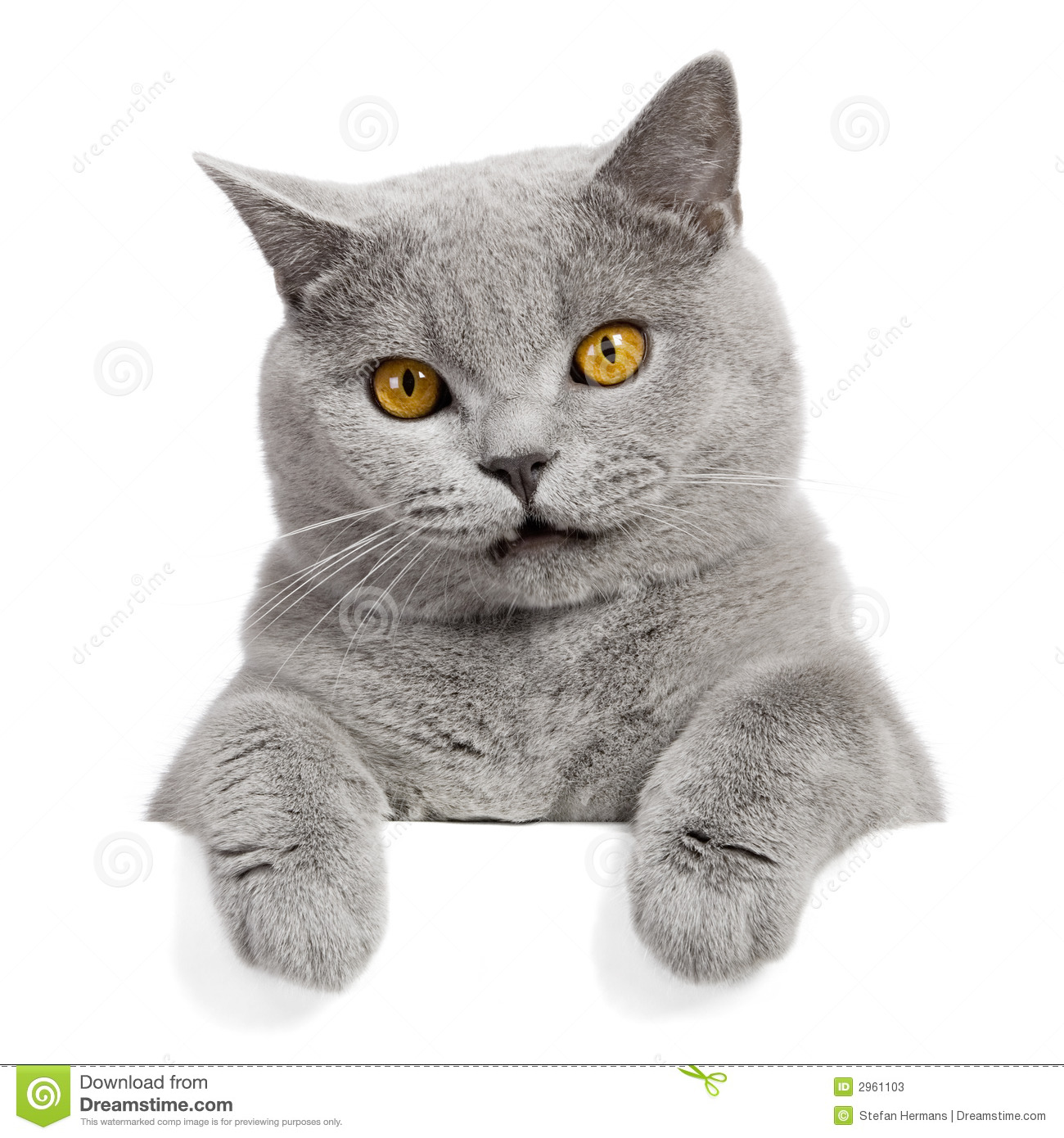 Lovely grey cat banner stock image. Image of banner ...