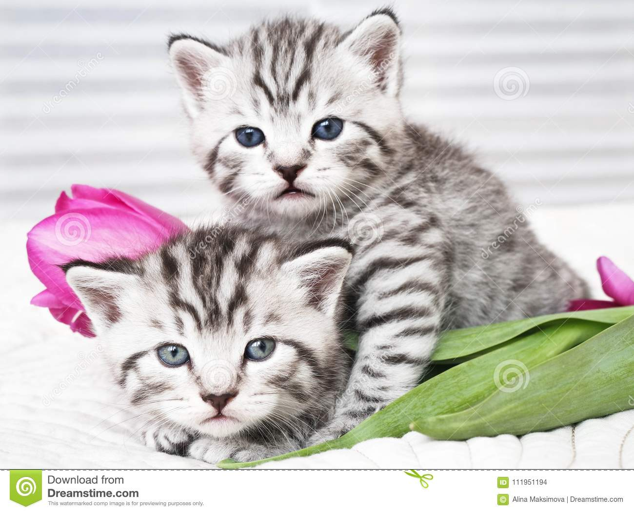 Lovely kittens with flowers