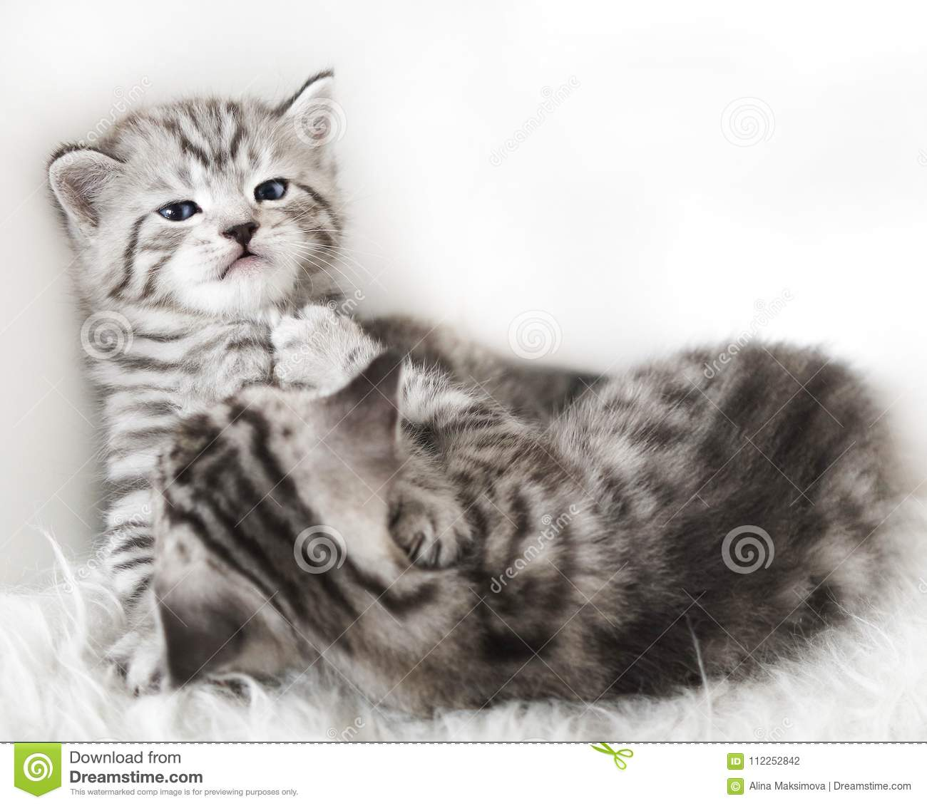 Lovely kittens are playing.