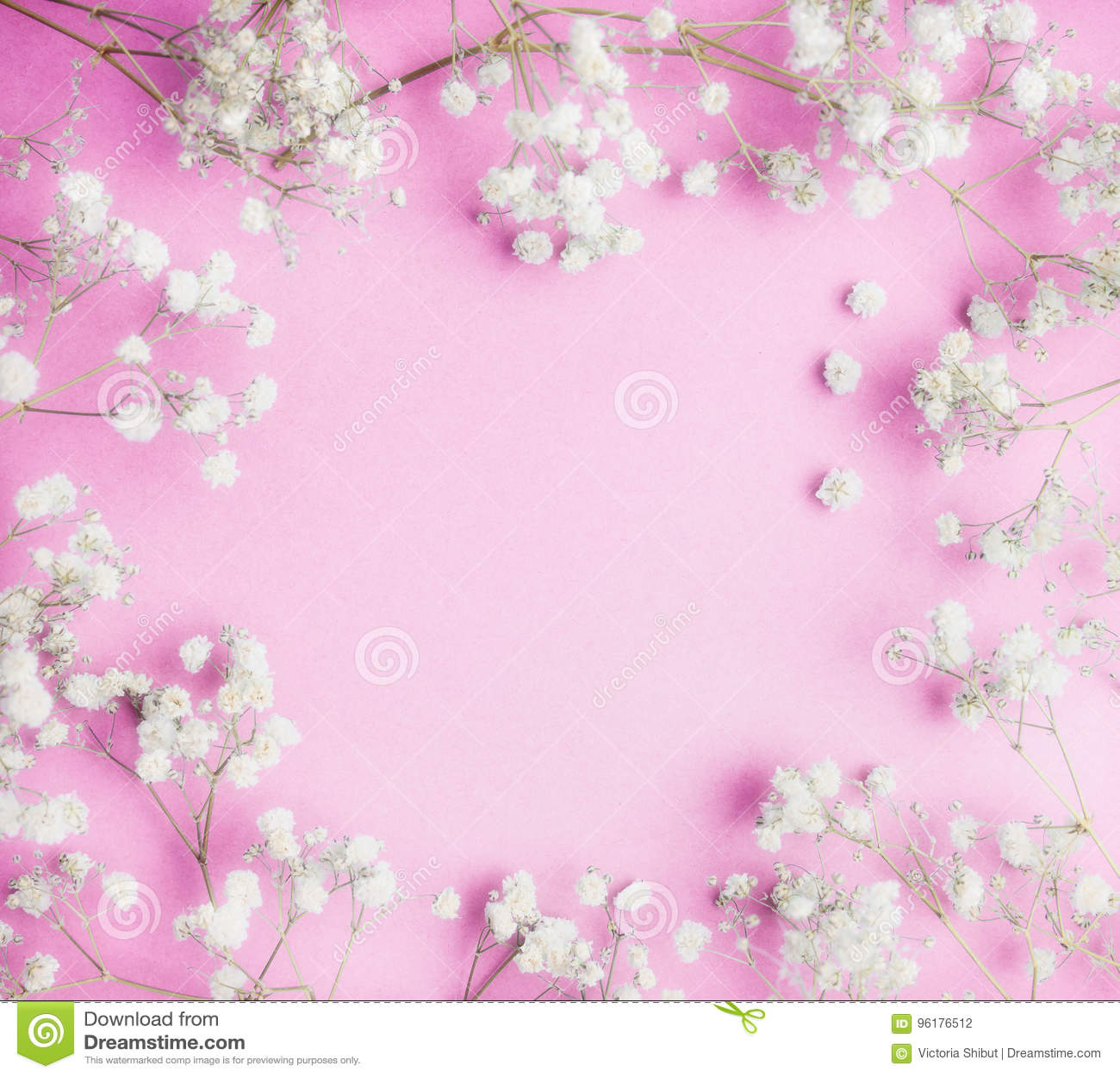 Lovely Little White Gypsophila Flowers On Pink Background Pretty