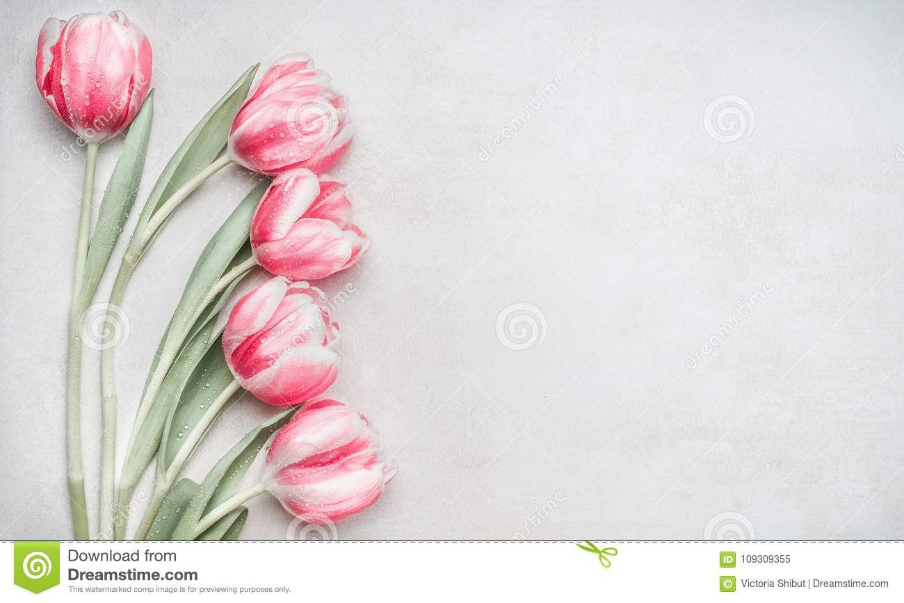Lovely pastel pink tulips bunch, floral border at light background, top view. Layout for springtime holidays