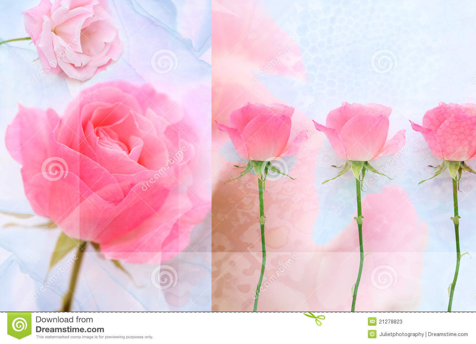 Lovey Pink Rose Wet
