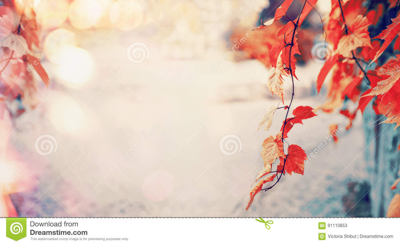 Lovely red autumn leaves with sun light and bokeh, outdoor fall nature background