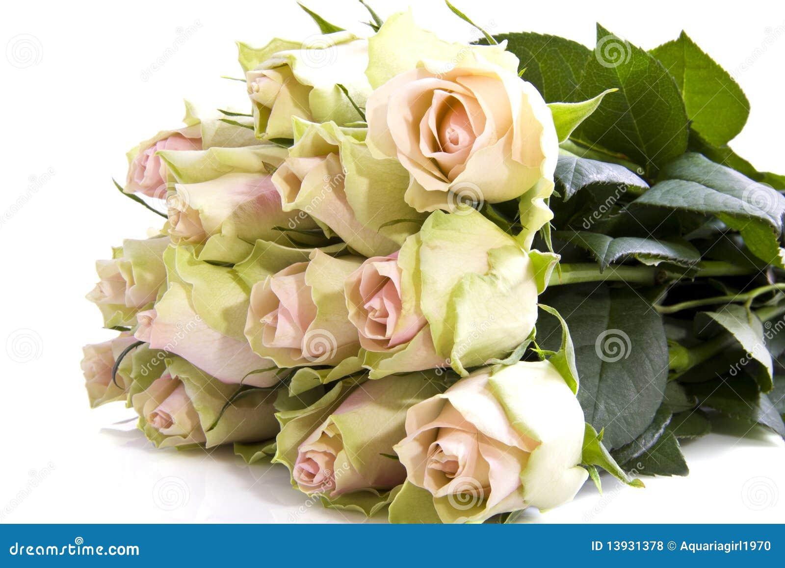 lovely roses stock photo. image of life, white, seasonal - 13931378