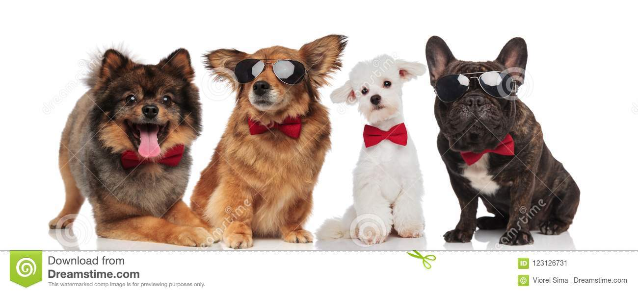 Lovely team of four elegant dogs with red bowties