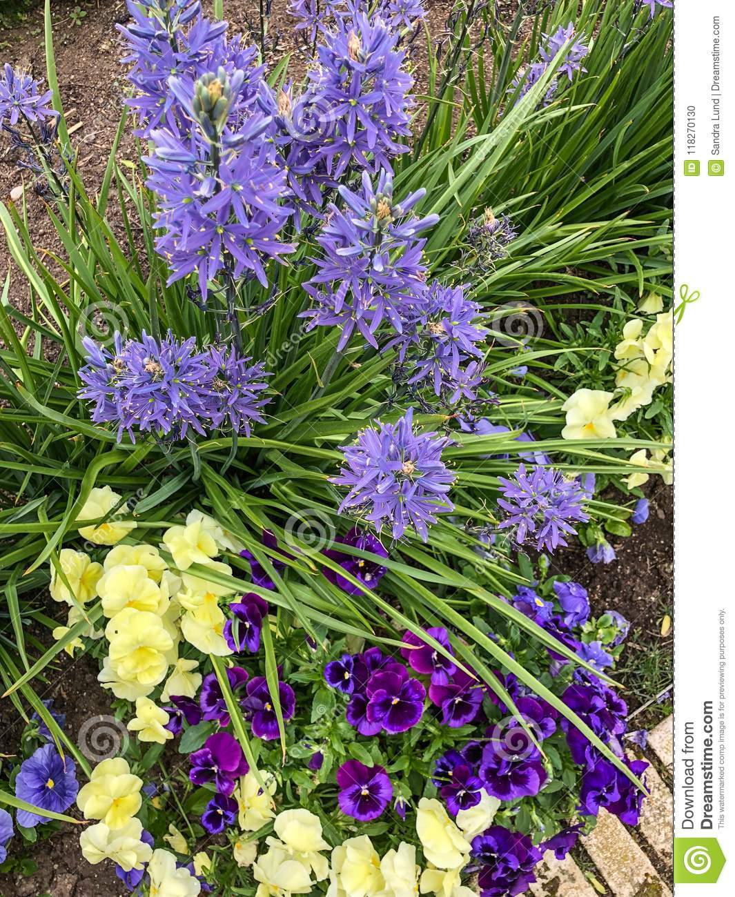 Lovely Variety Of Purple And Yellow Flowers In Garden Stock Photo