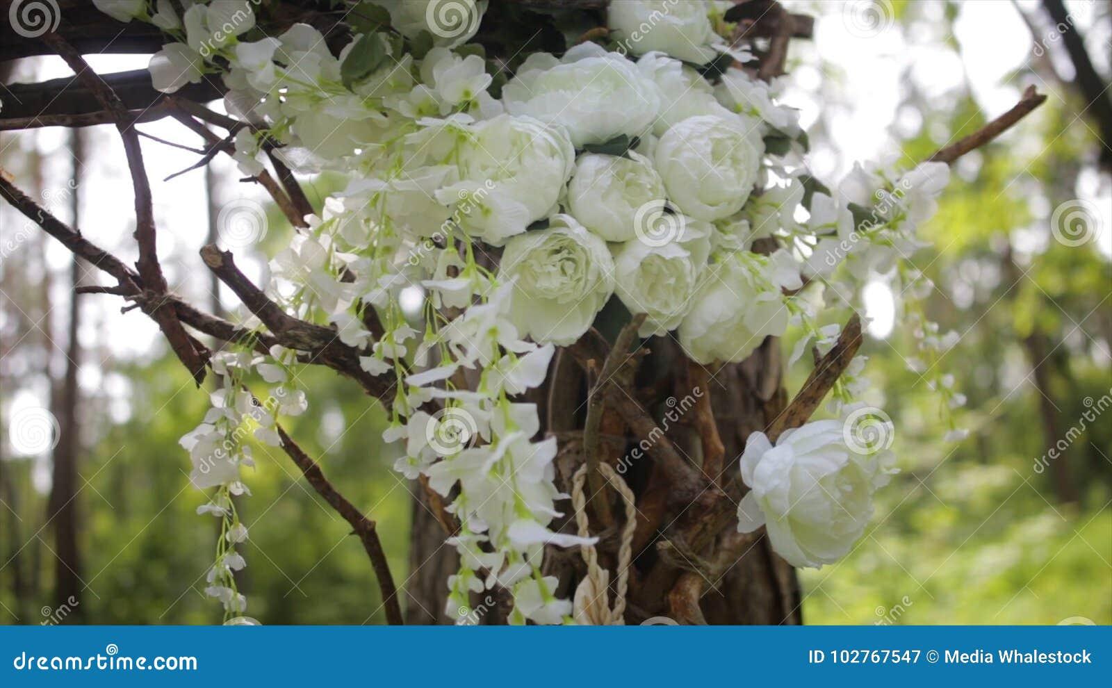 Lovely White Bush Roses Ornamental White Flowers On Bright Sun