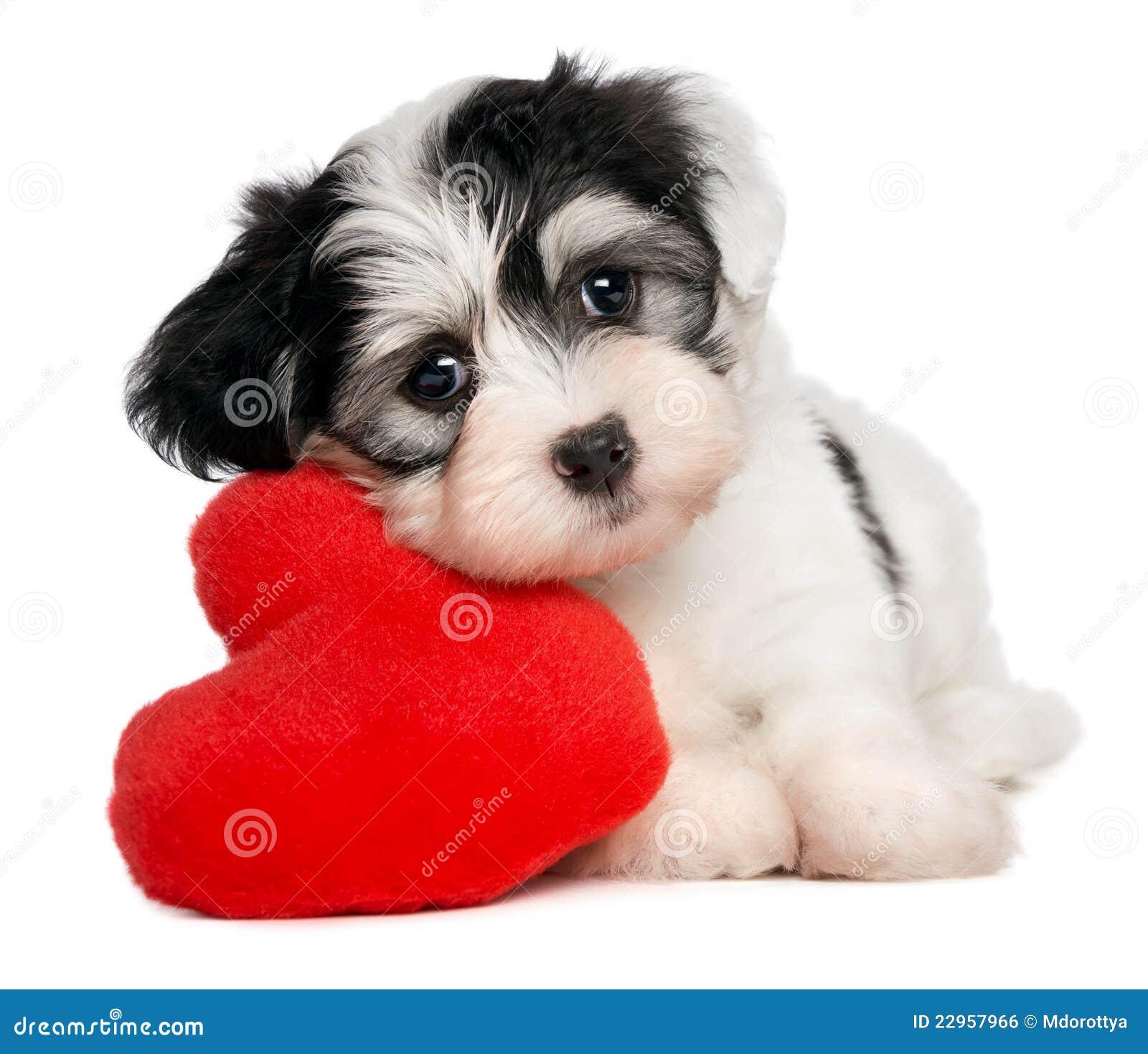 valentine puppy clipart - photo #36