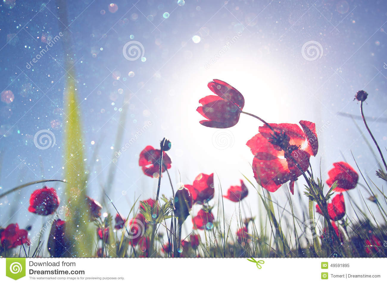 Low angle photo of red poppies against sky with light burst and glitter sparkling lights