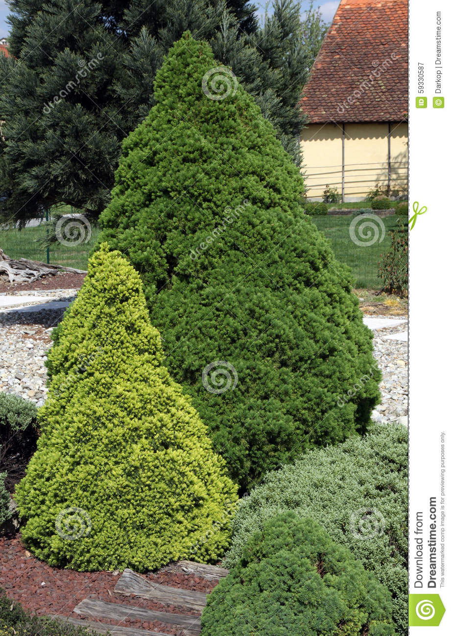 Low Growing Ornamental Conifers Stock Image Image Of