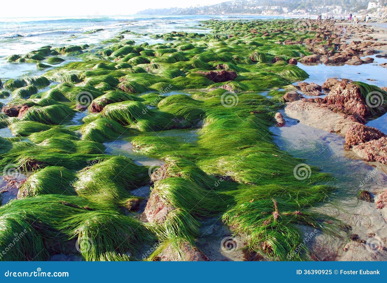 Low Tide Laguna Beach