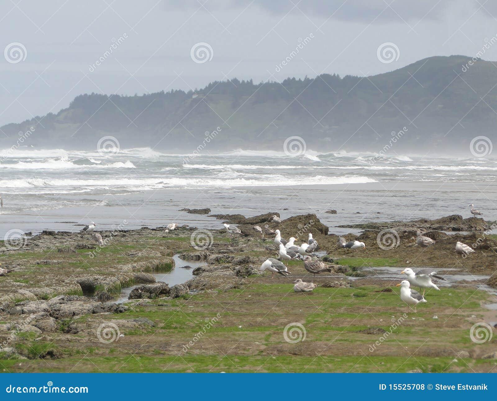 Low tide, tide pools, gulls