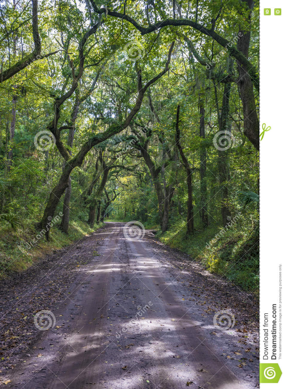 Lowcountry Dirt Road with Oak Tree Forest to Botany Bay Plantation in  Edisto Island, South Carolina.