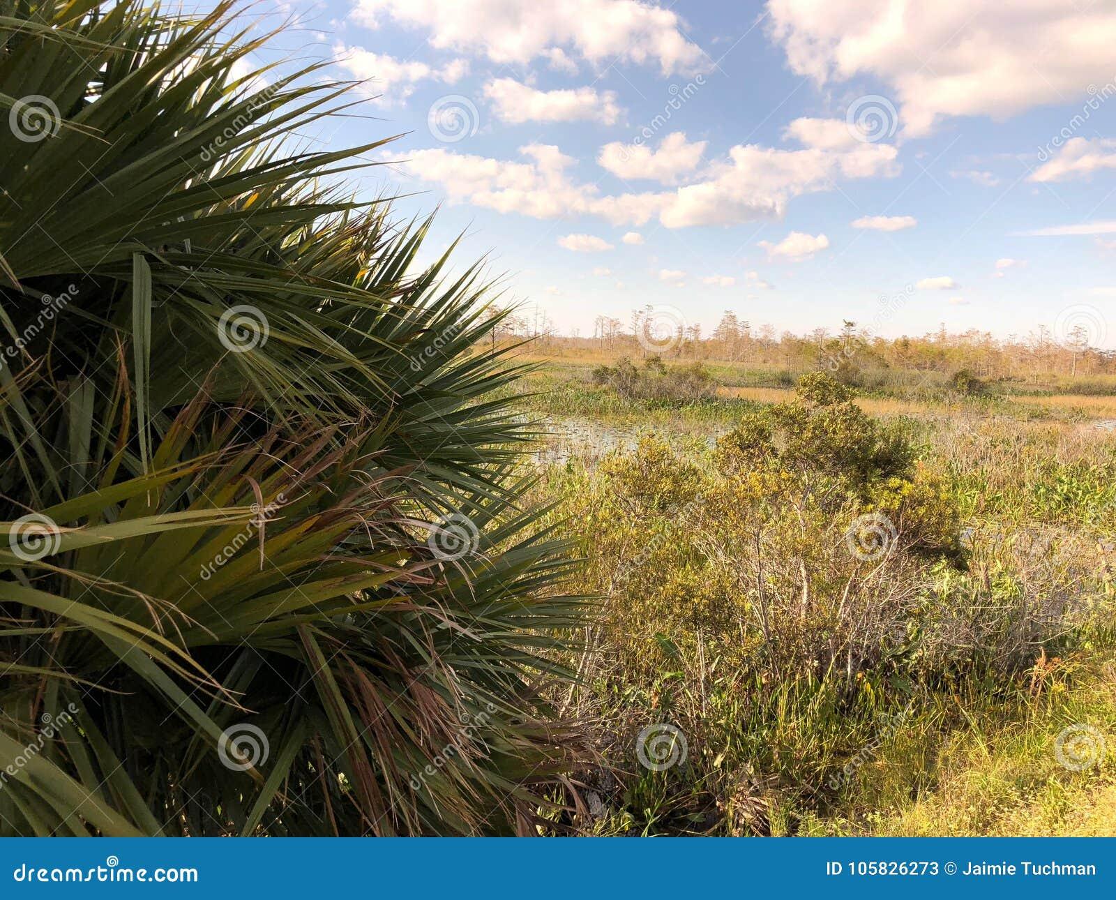 Louisiana Swamp stock image. Image of wetland, florida - 105826273