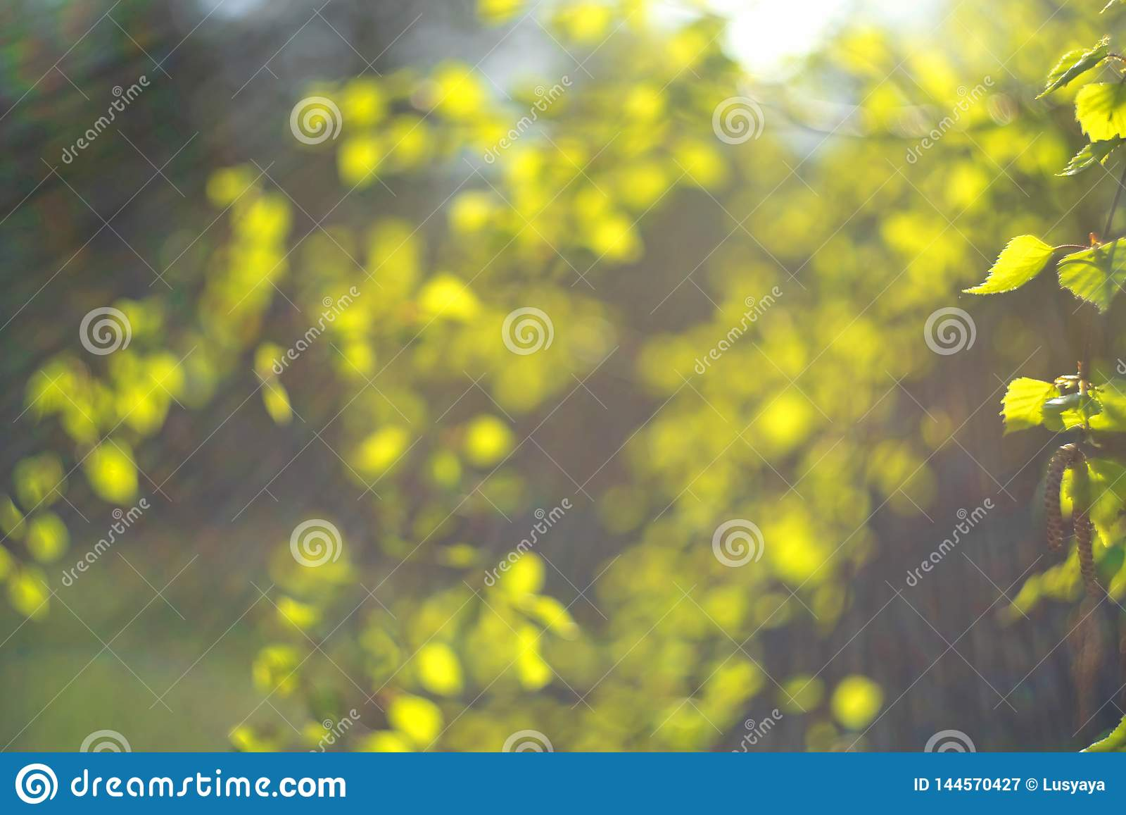 LRainbow del verde de la primavera el sun& x27; rayos de s en un fondo borroso del follaje verde fresco Concepto de la naturaleza