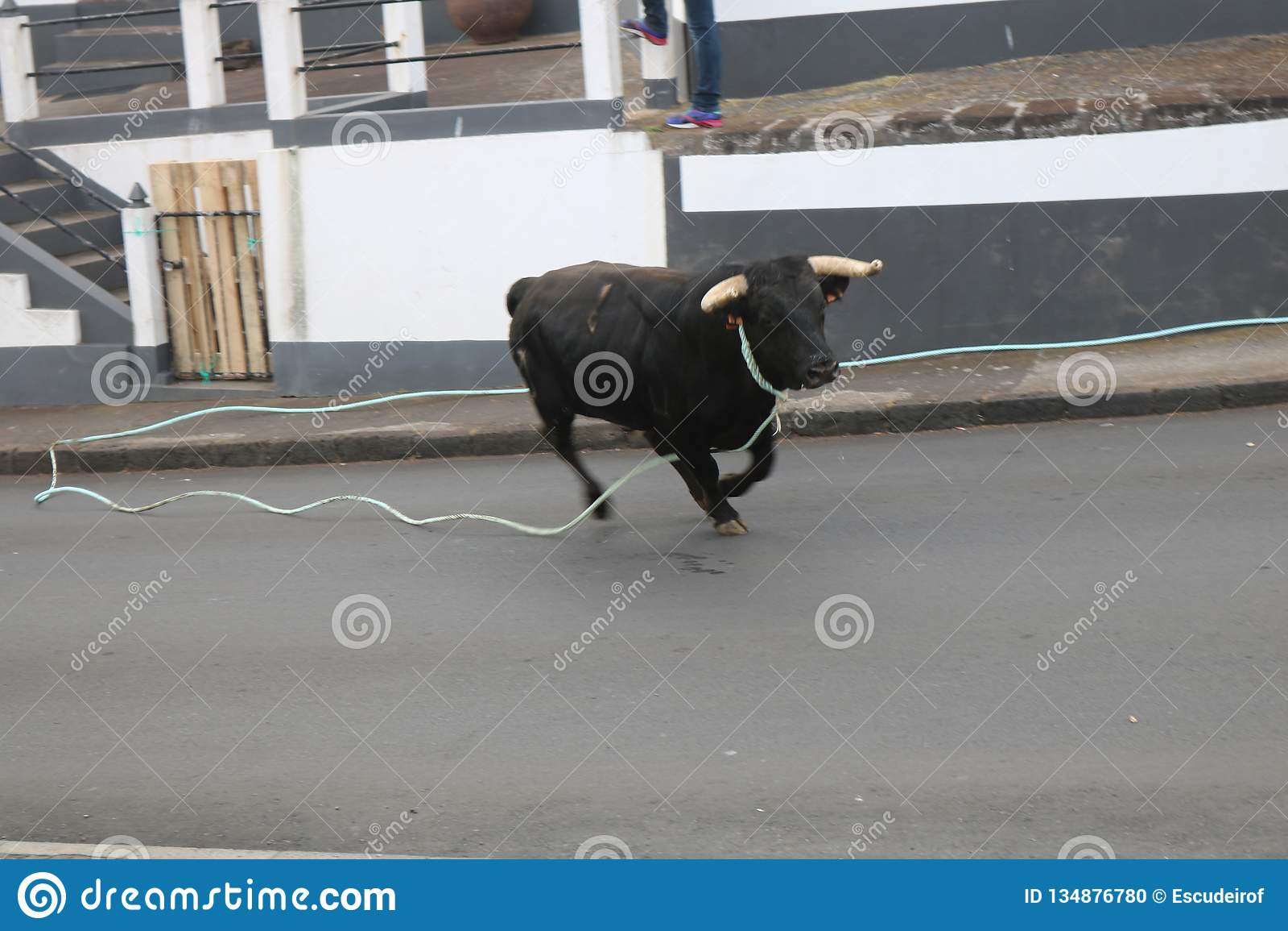 Luźny byk