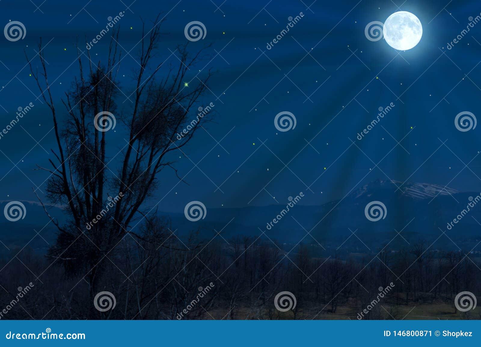 Lua cheia sobre a floresta e os campos Silhueta da árvore no luar