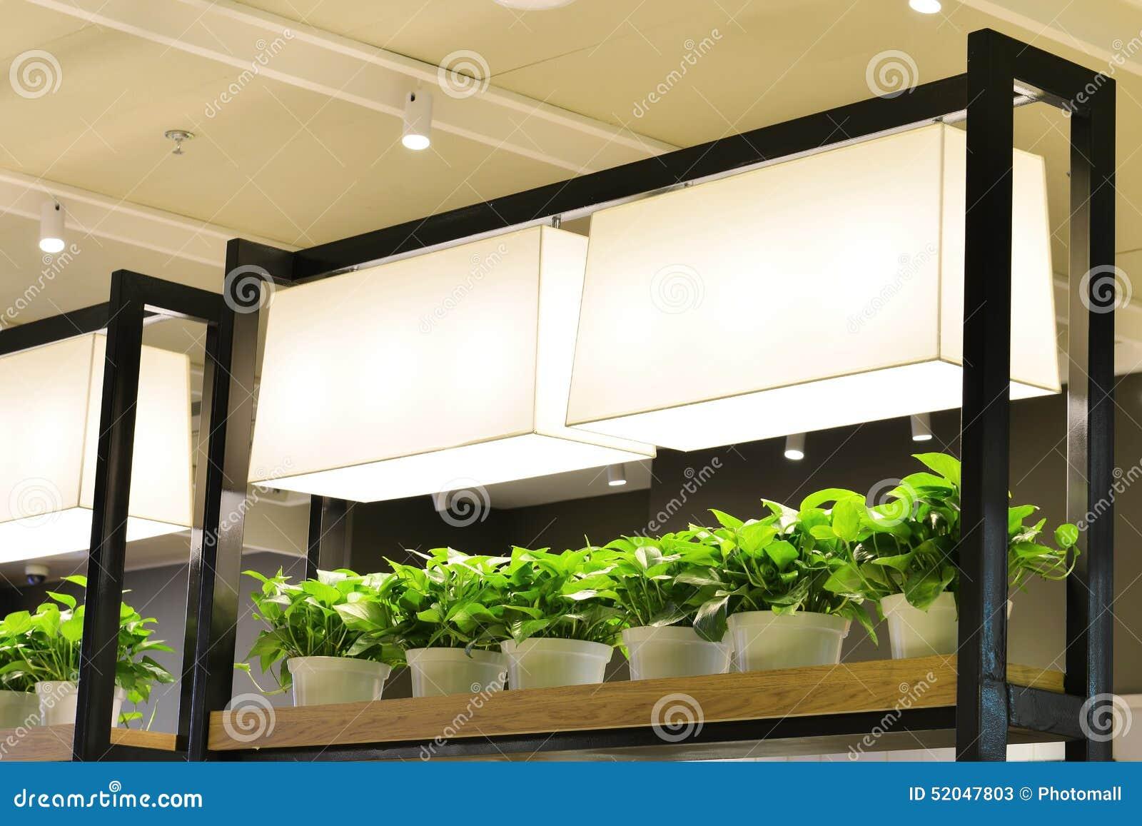 Luce per piante coltivazione piante carnivore coltivare lampade