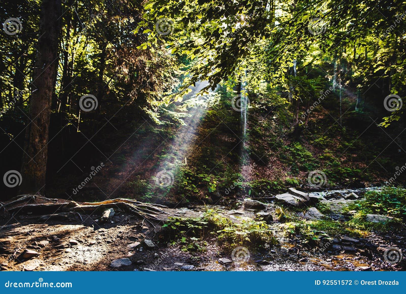 Luce solare che attraversa gli alberi
