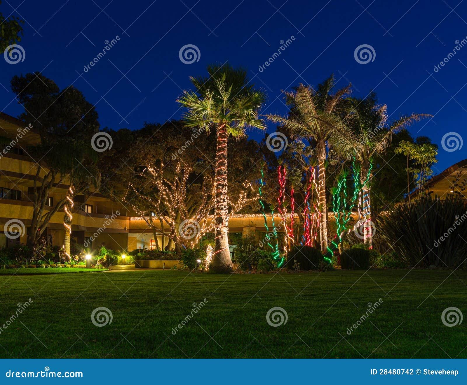 Luces de la navidad en las palmeras for Iluminacion para palmeras