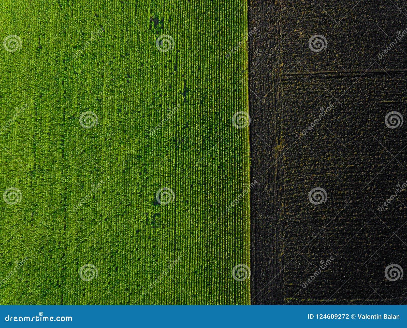 Lucht groen gebied