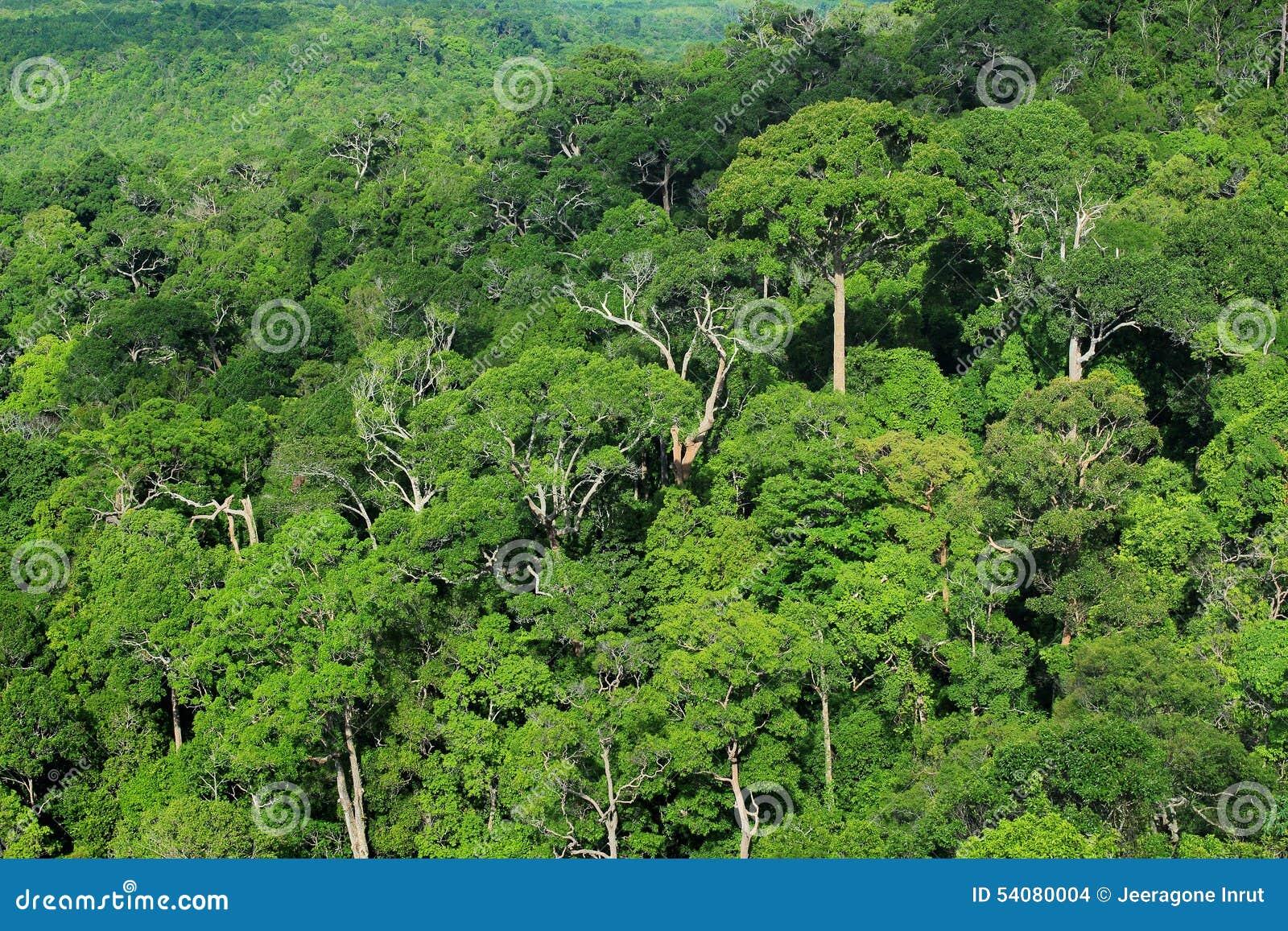 Lucht mening van bos