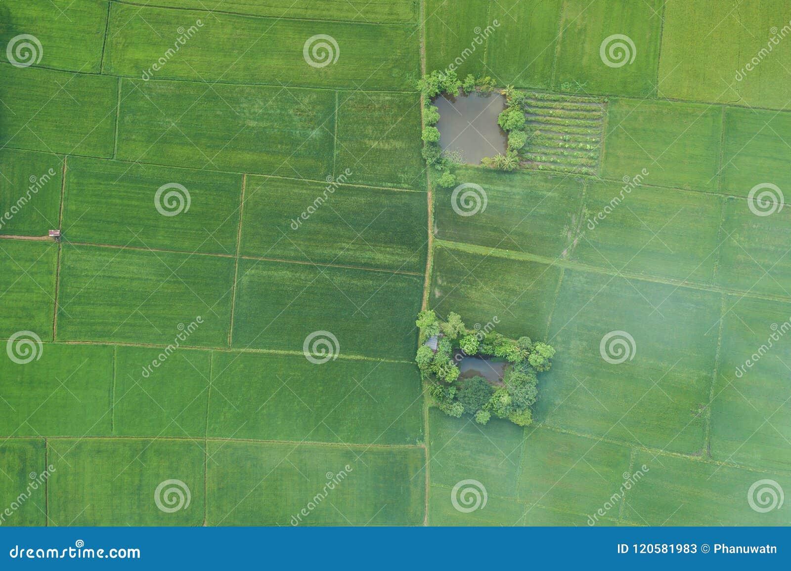 Luchtmening van Vliegende Hommel Mooi groen gebied van jonge ric