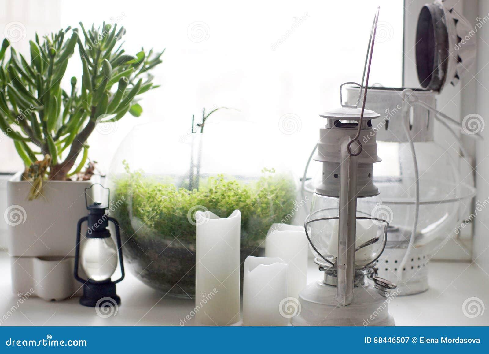 Illuminazione per piante da appartamento: piante da appartamento