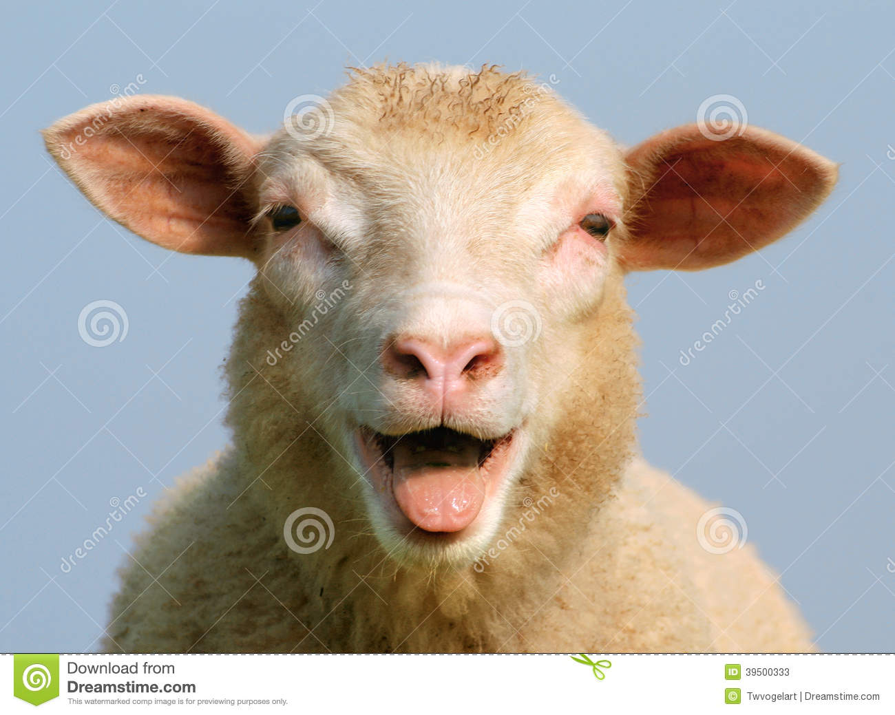 Luci the sheep