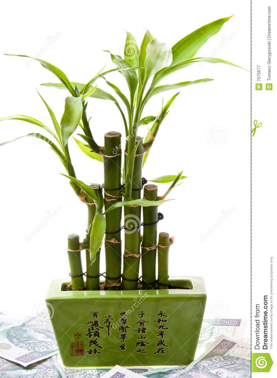 lucky bamboo on money 39 s background royalty free stock. Black Bedroom Furniture Sets. Home Design Ideas