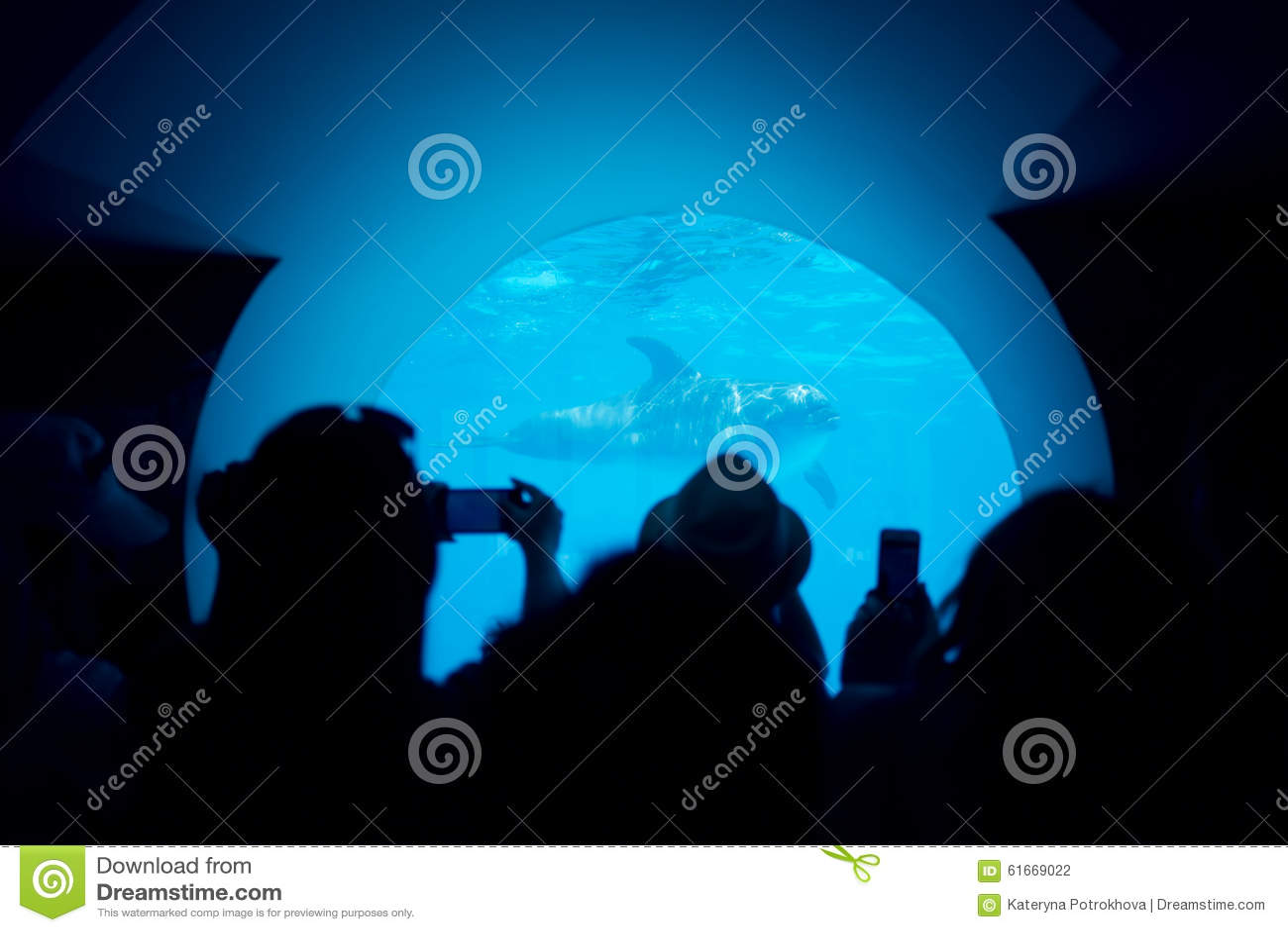 Ludzie biorą obrazki delfiny