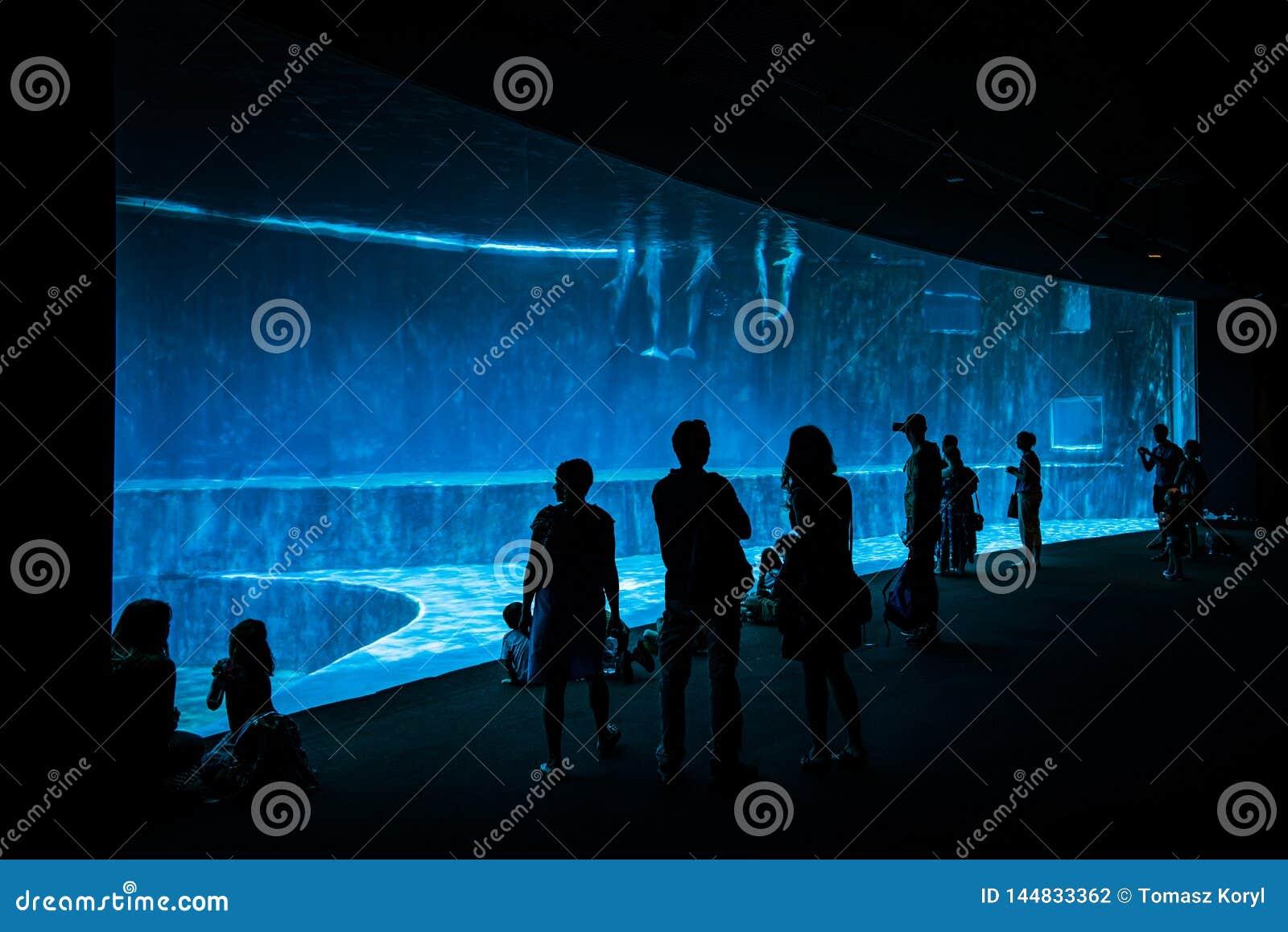 Ludzie ogląda delfiny w wielkim akwarium w genui, Europa 600 zwierzęcych gatunków i 200 vegetal gatunków