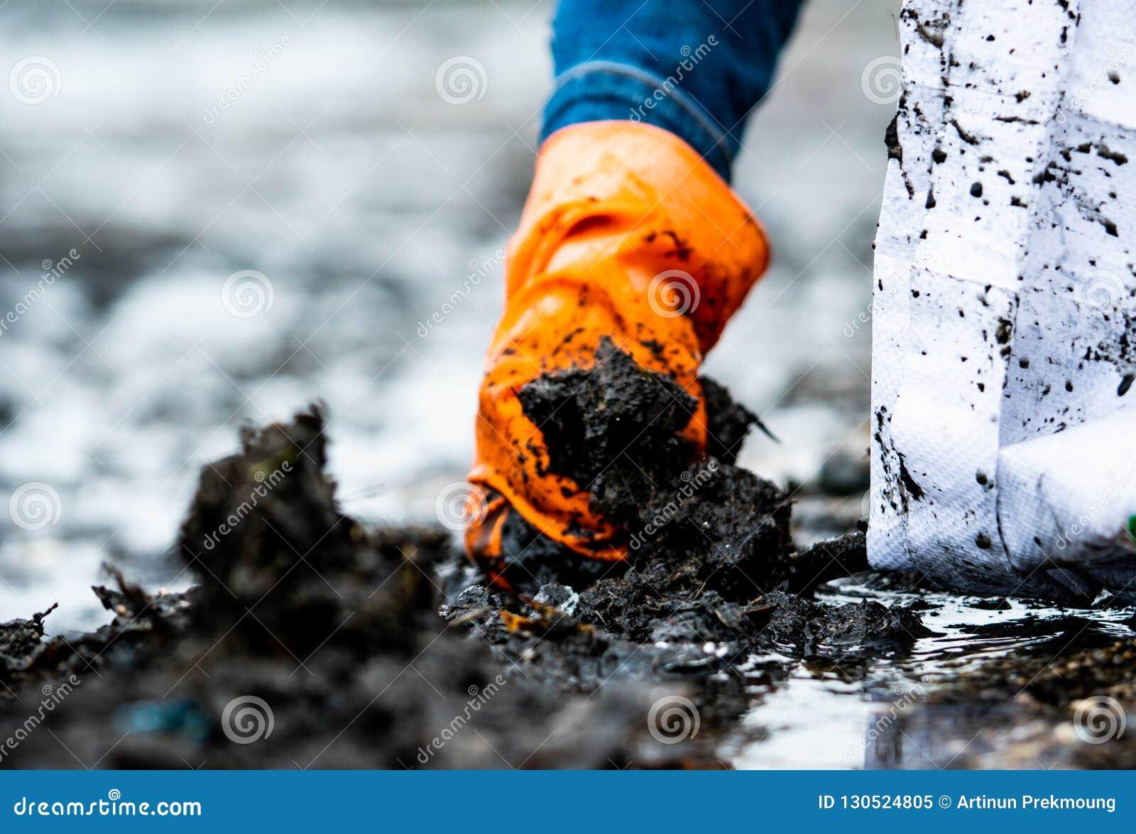 Ludzie podnosi śmieci w górę wewnątrz biała torba są ubranym pomarańczowe rękawiczki Zbliżenie ręka dorosły zgłaszać się na ochot