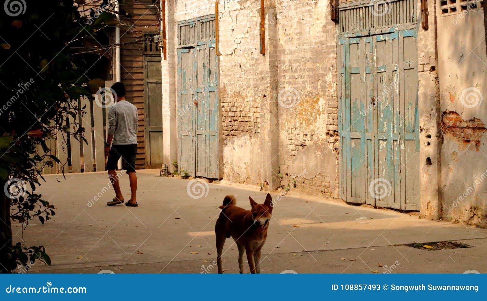 Ludzie z psami chodzą w starej ściana z cegieł społeczności