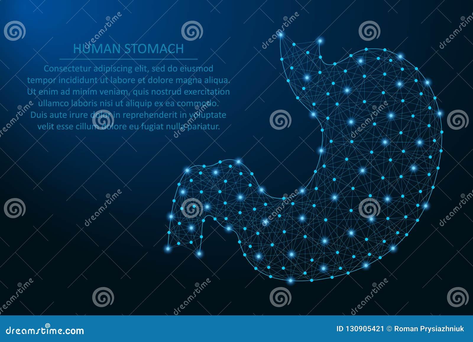 Ludzki żołądek, zdrowy ludzki wewnętrzny przetrawienie organ robić punktami i linie, poligonalna wireframe siatka, niska poli- il