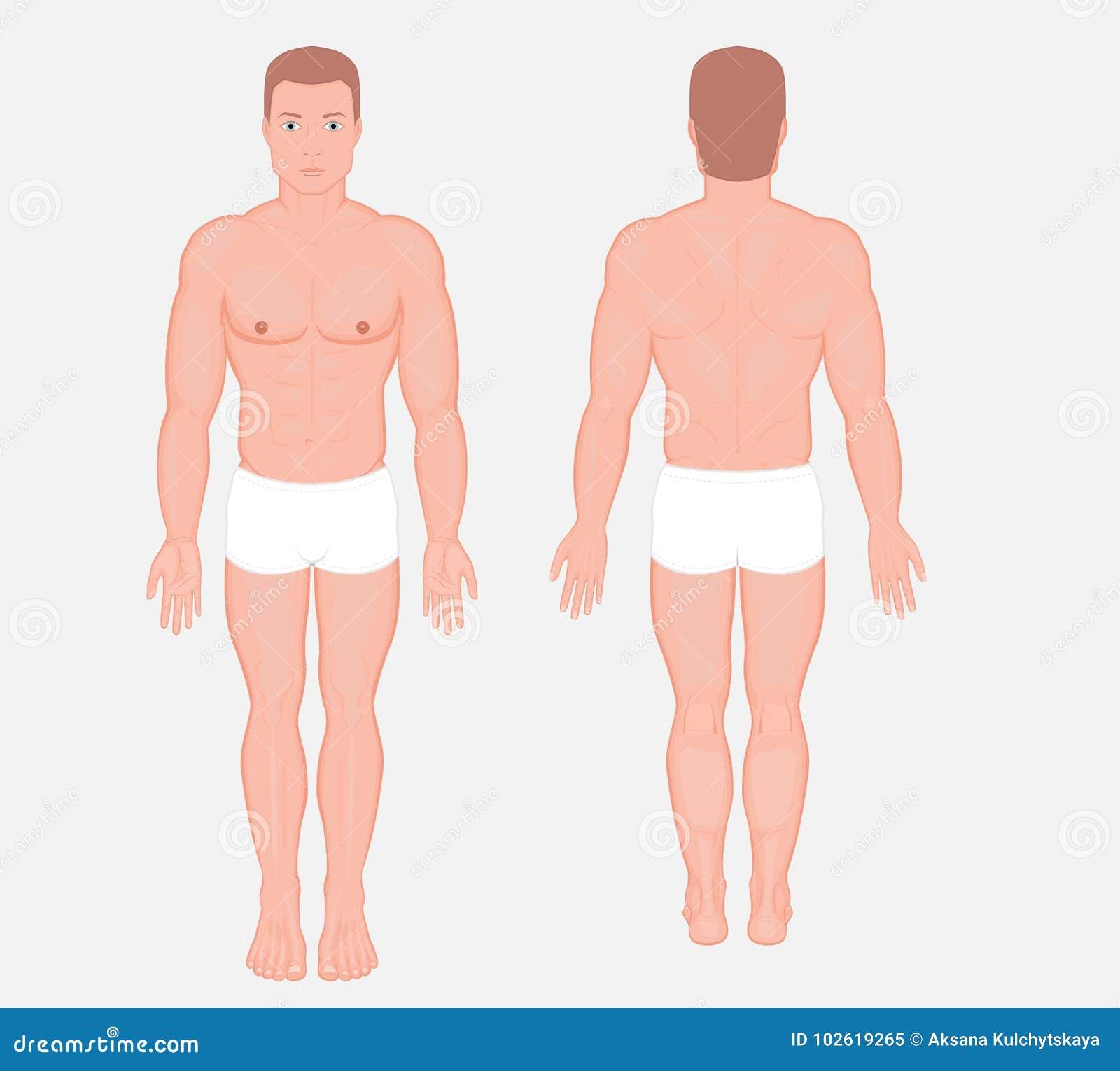 Ludzki anatomy_European mężczyzna ciało