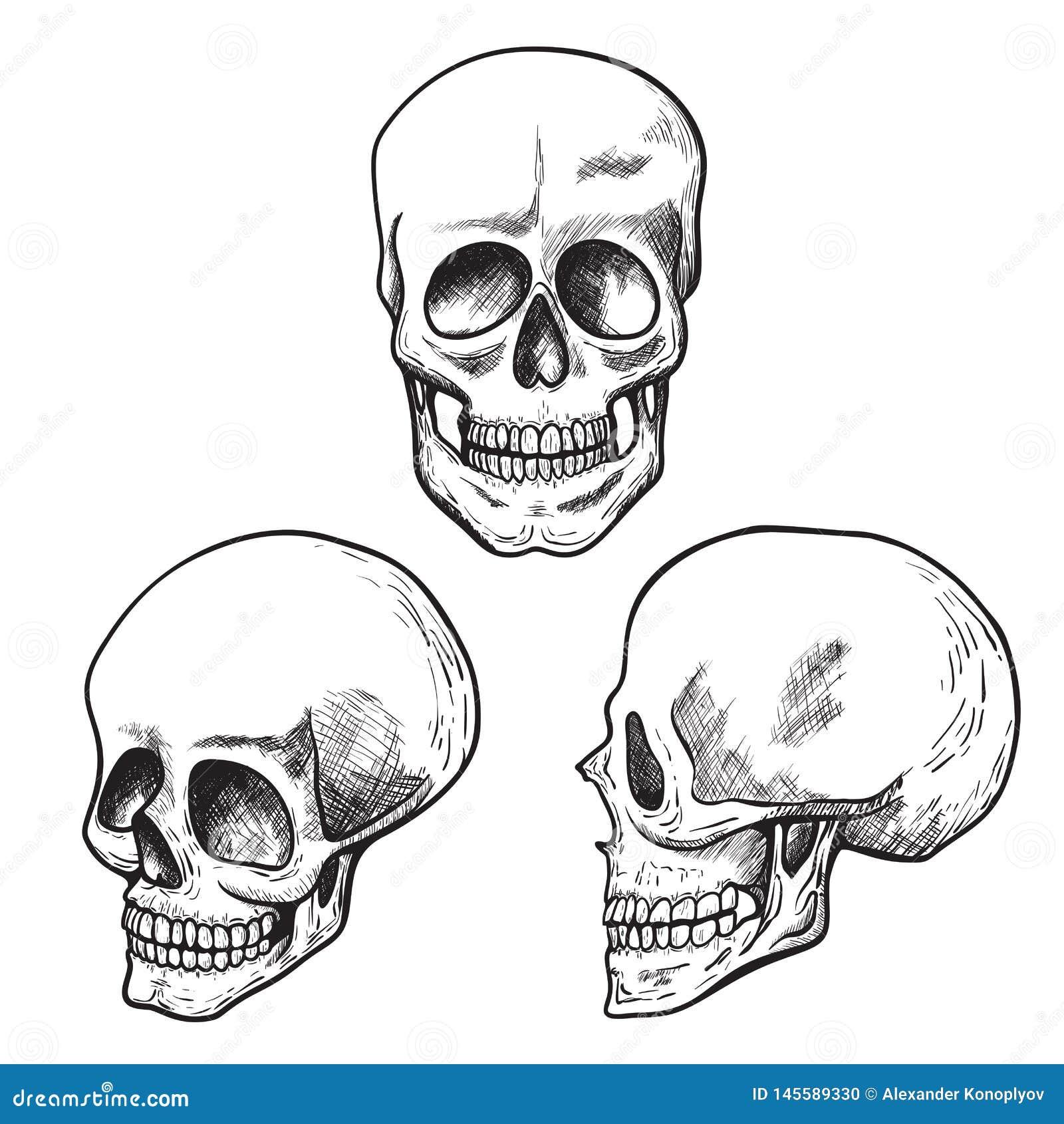 Ludzki czaszki nakreślenia set, medyczny, i nauka