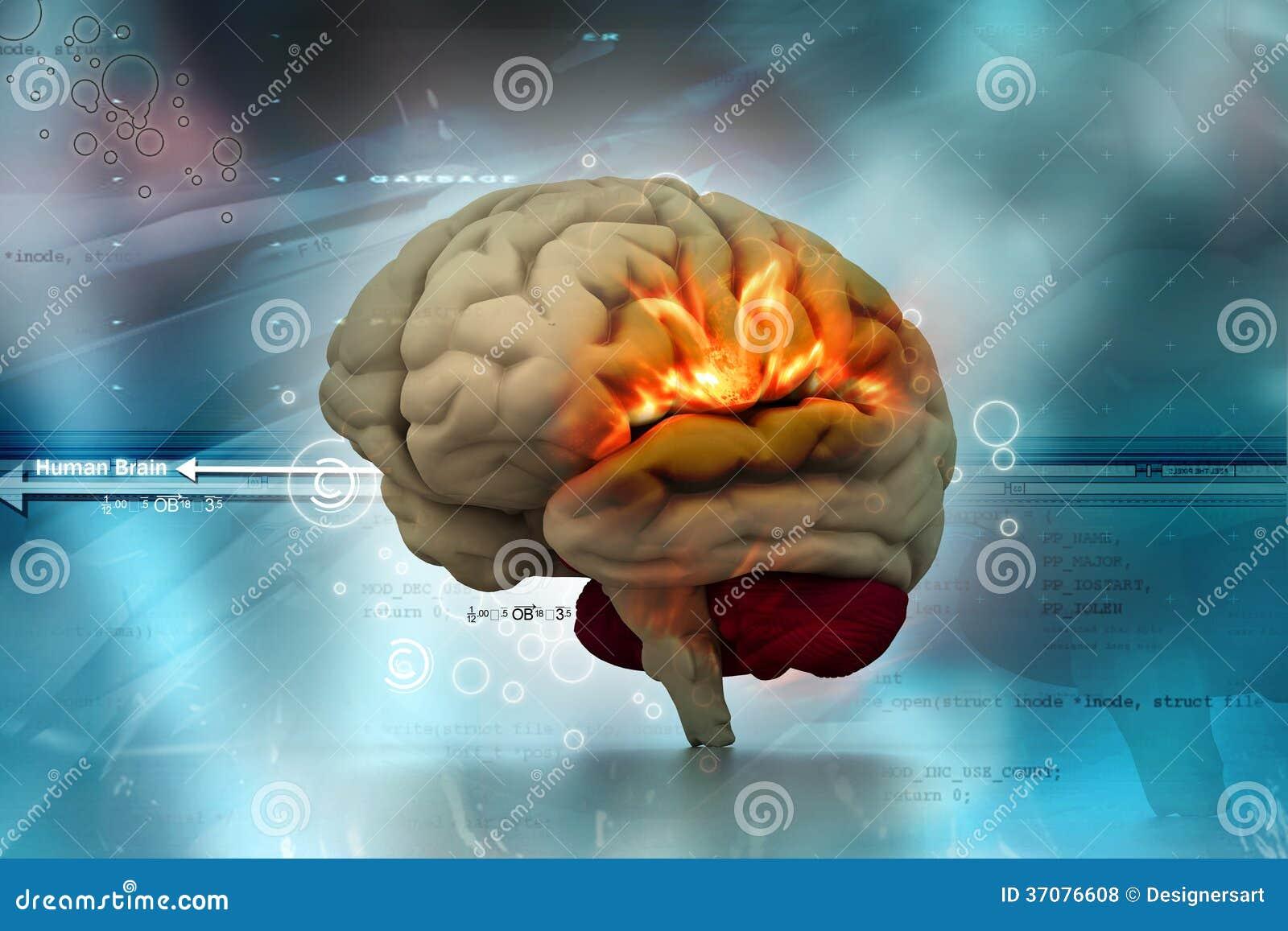 Download Ludzki mózg ilustracji. Ilustracja złożonej z organ, metal - 37076608