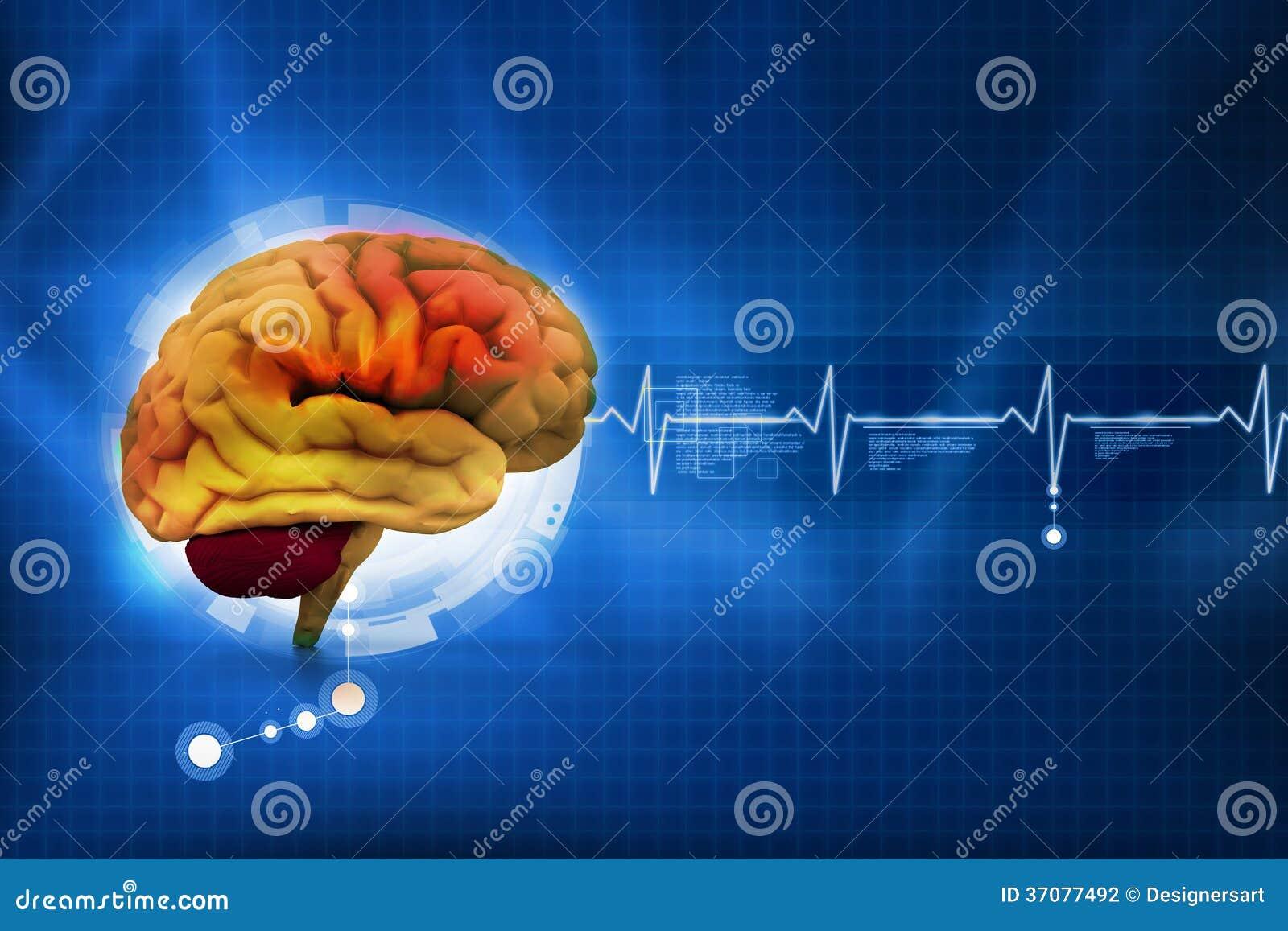 Download Ludzki mózg ilustracji. Ilustracja złożonej z intelektualista - 37077492
