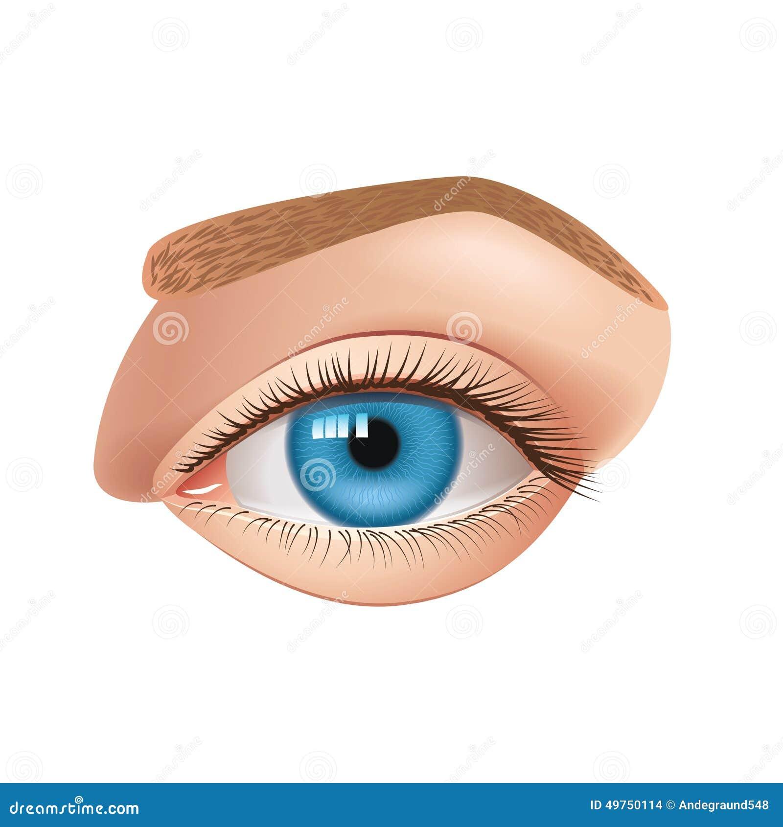 Ludzki oko odizolowywający na białym wektorze