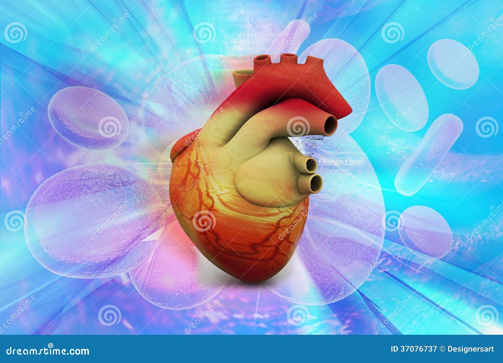 Download Ludzki serce ilustracji. Ilustracja złożonej z physical - 37076737