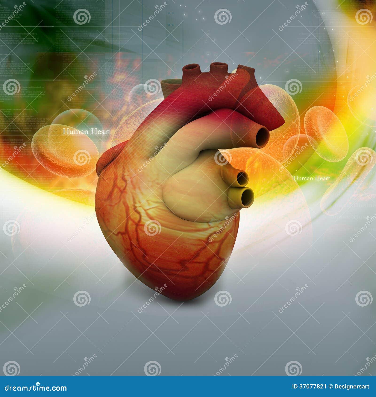 Download Ludzki serce ilustracji. Ilustracja złożonej z aorta - 37077821