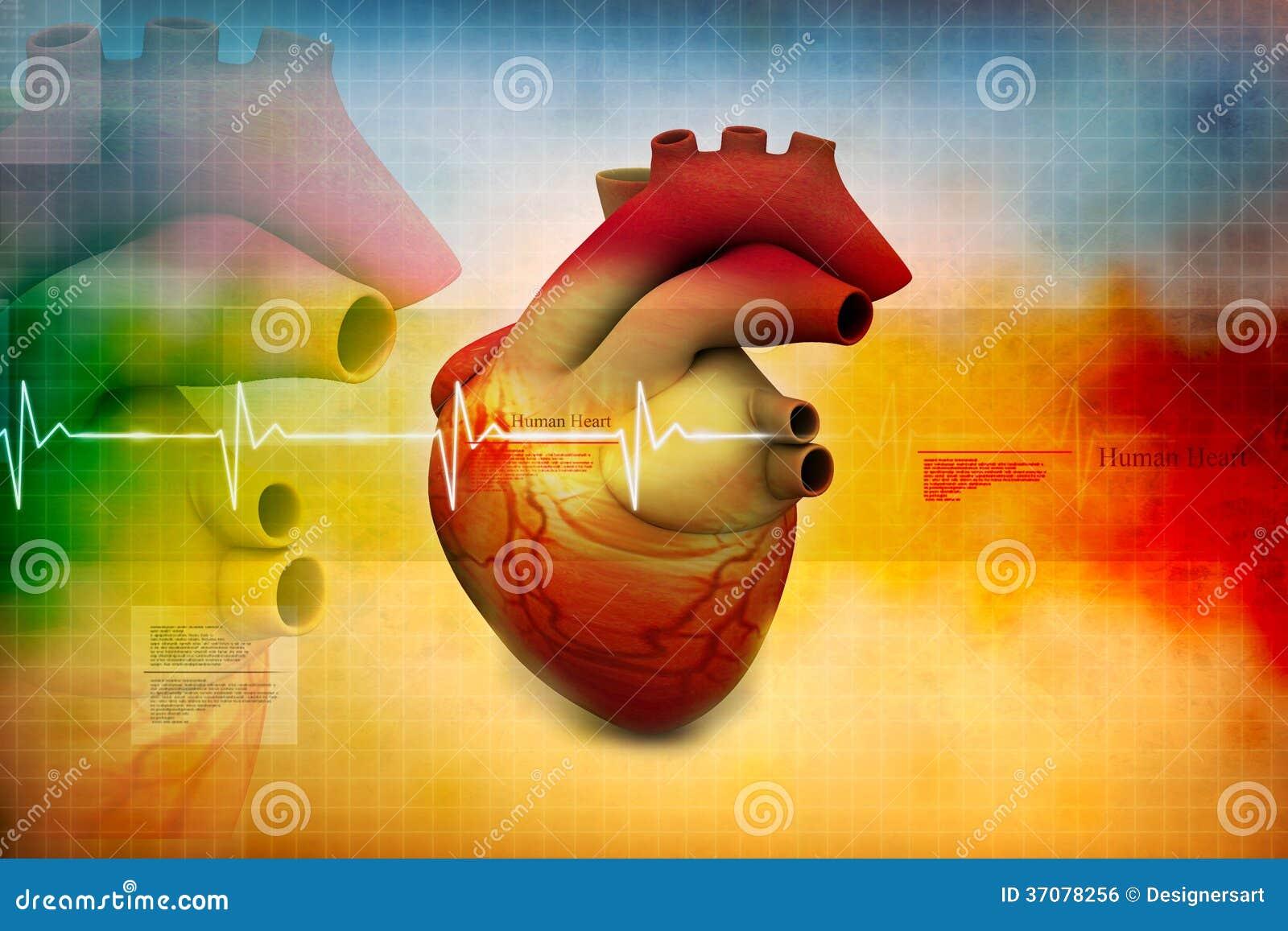 Download Ludzki serce ilustracji. Ilustracja złożonej z szpital - 37078256