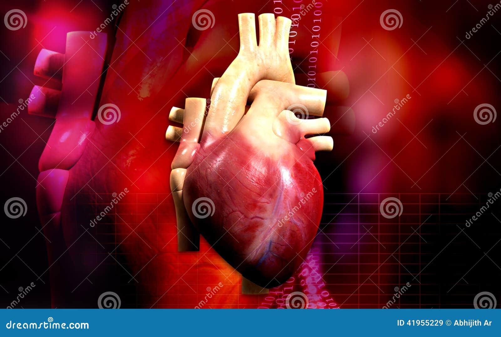 Ludzki serce