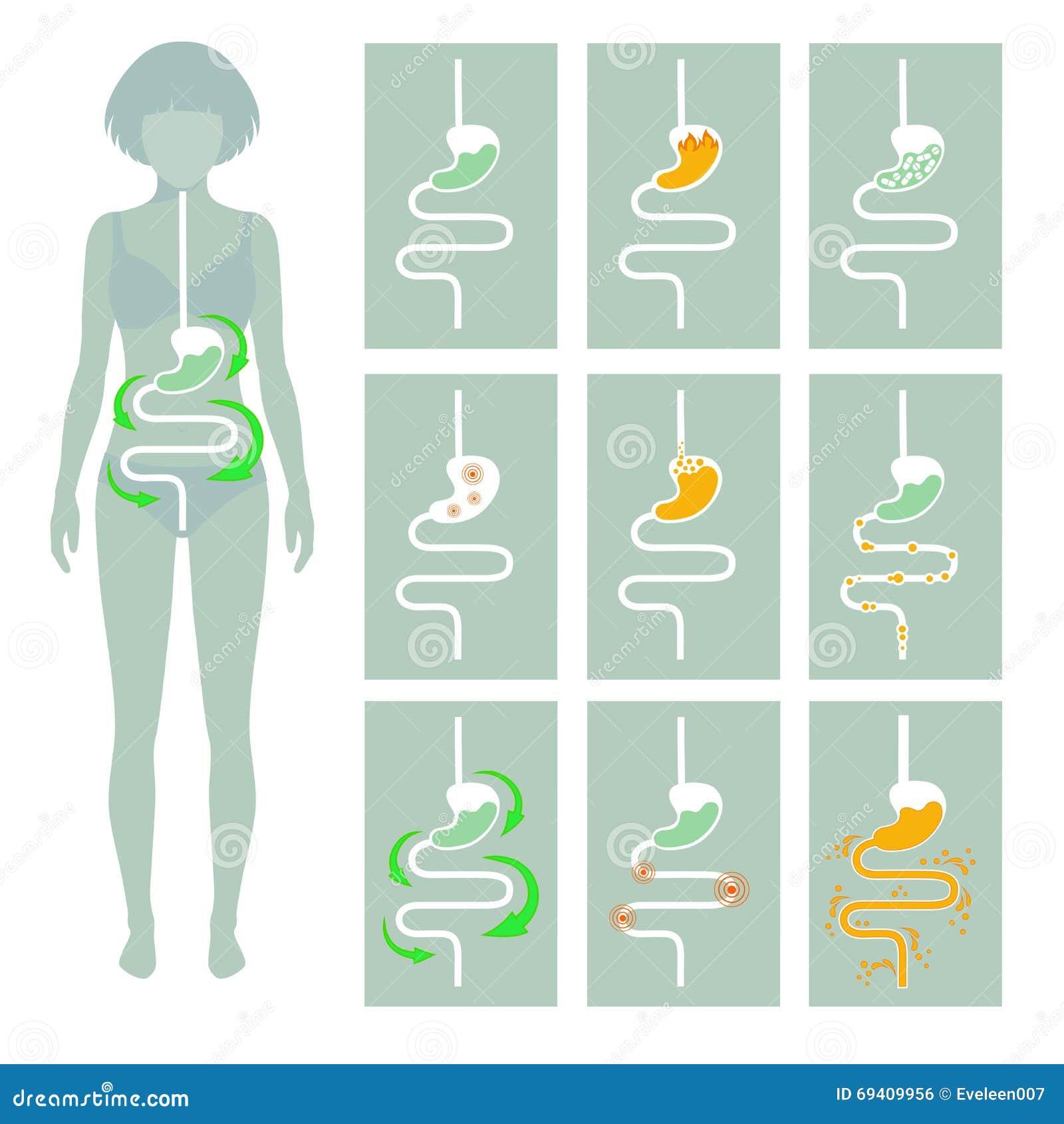Ludzki trawienny system,