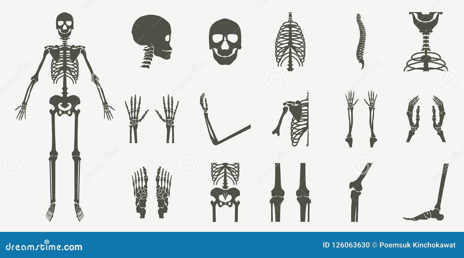 Ludzkie kości ortopedyczne i zredukowana sylwetka