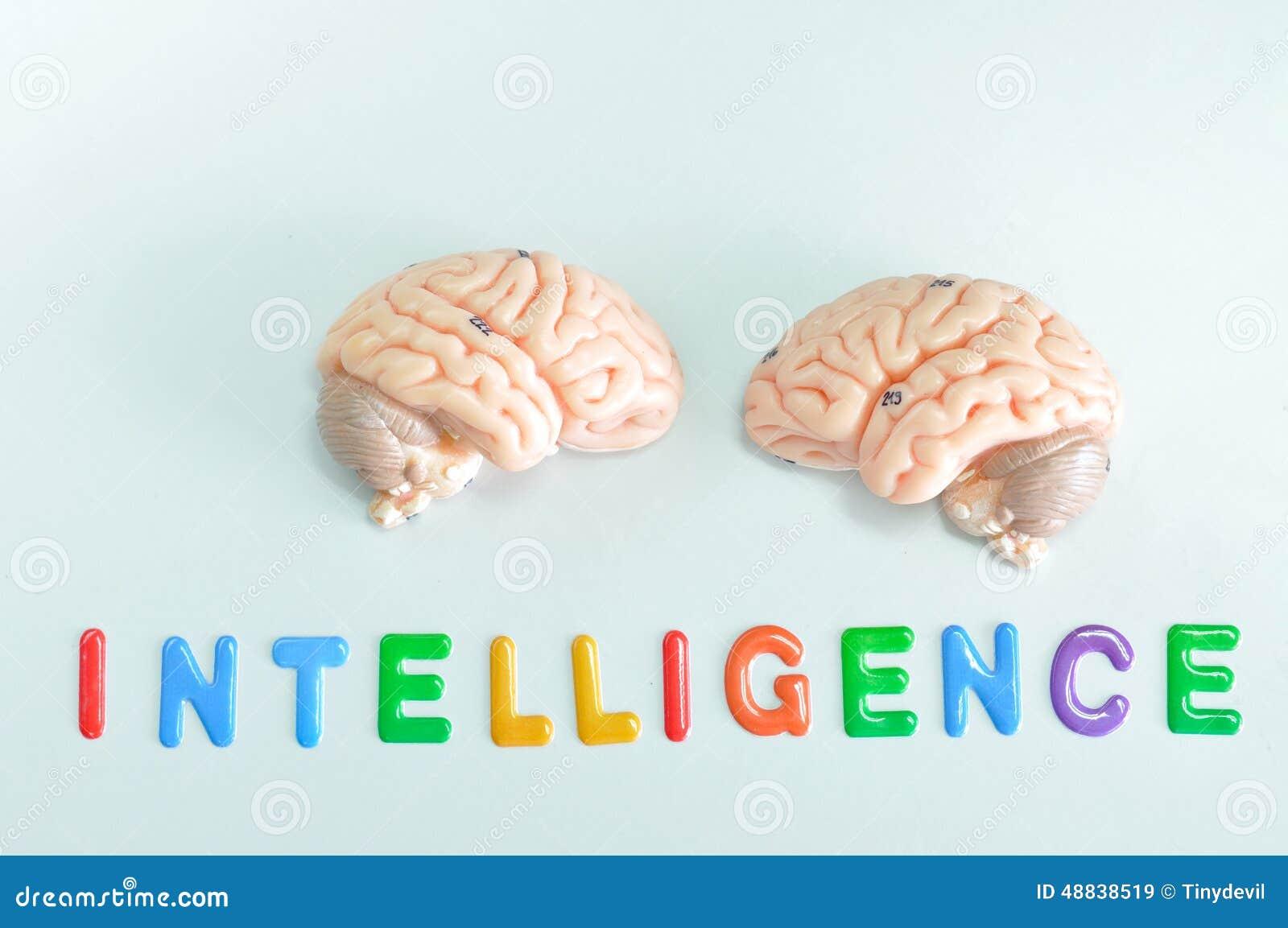Ludzkiego mózg model