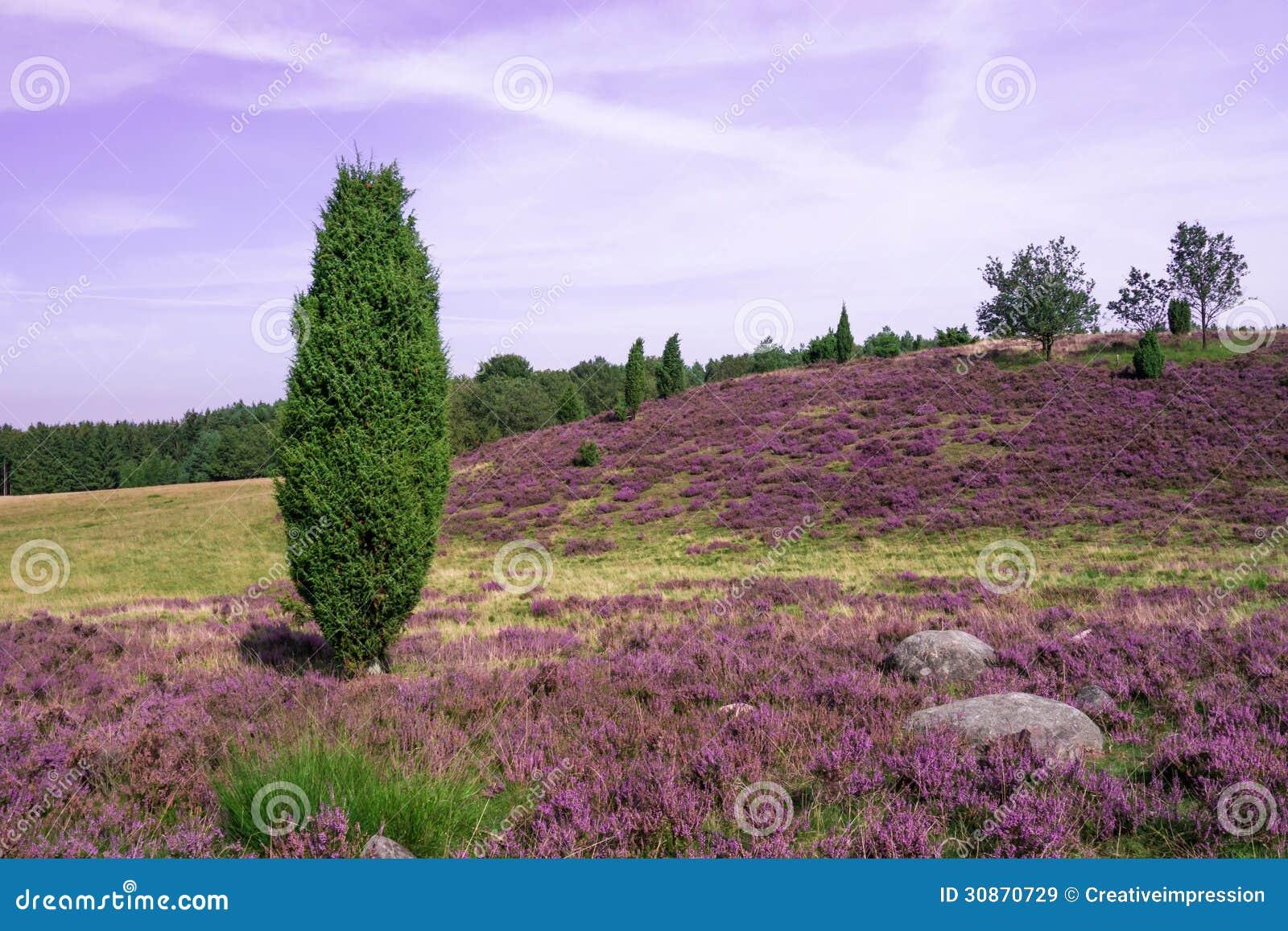 Lueneburg hed