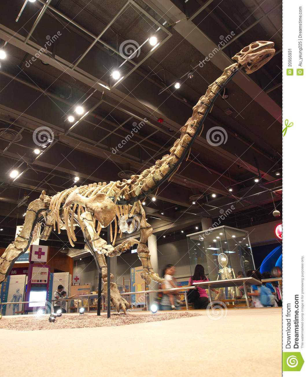 Lufengosaurus Magnus in Hong Kong Science Museum