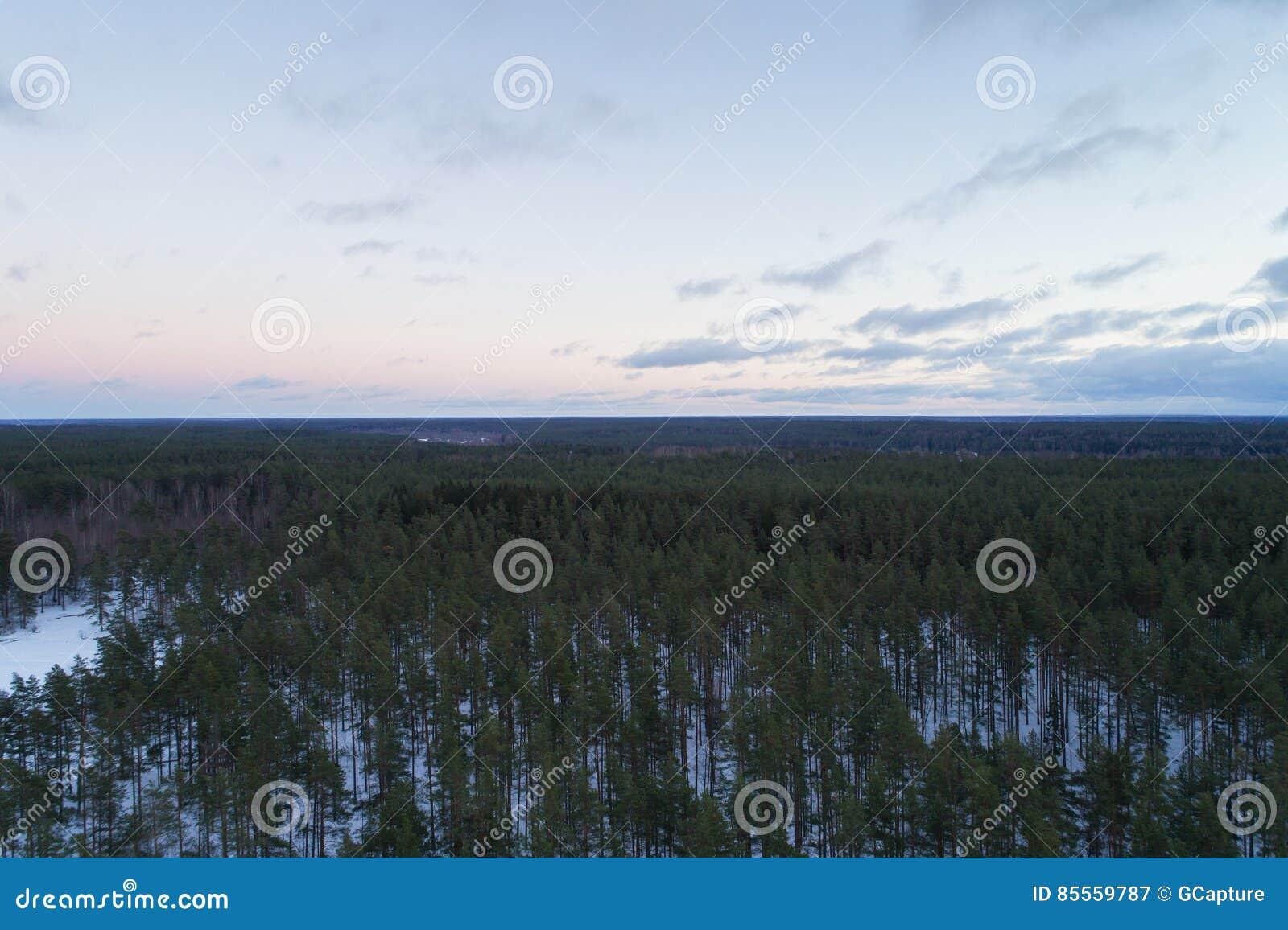 Luftaufstiegsflug über Winterkiefernwald am dunklen Abend nach Sonnenuntergang